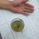 Tea farmers hand.